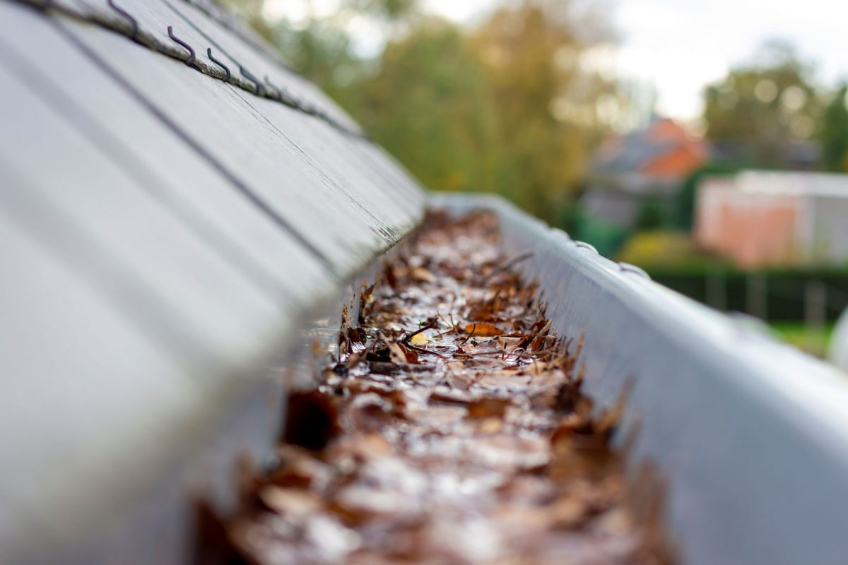 Fall Gutter Cleaning Guide: Why It's Important and How To Do It